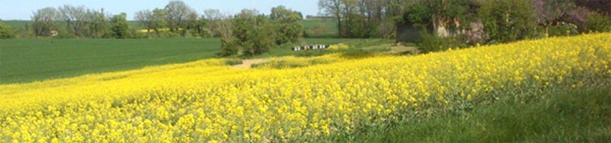 Miel et Délices, location de ruches pour la pollinisation du colza