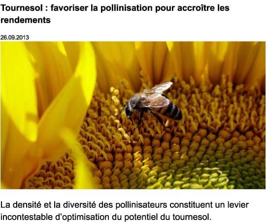 Location de ruches pour la pollinisation - tournesol