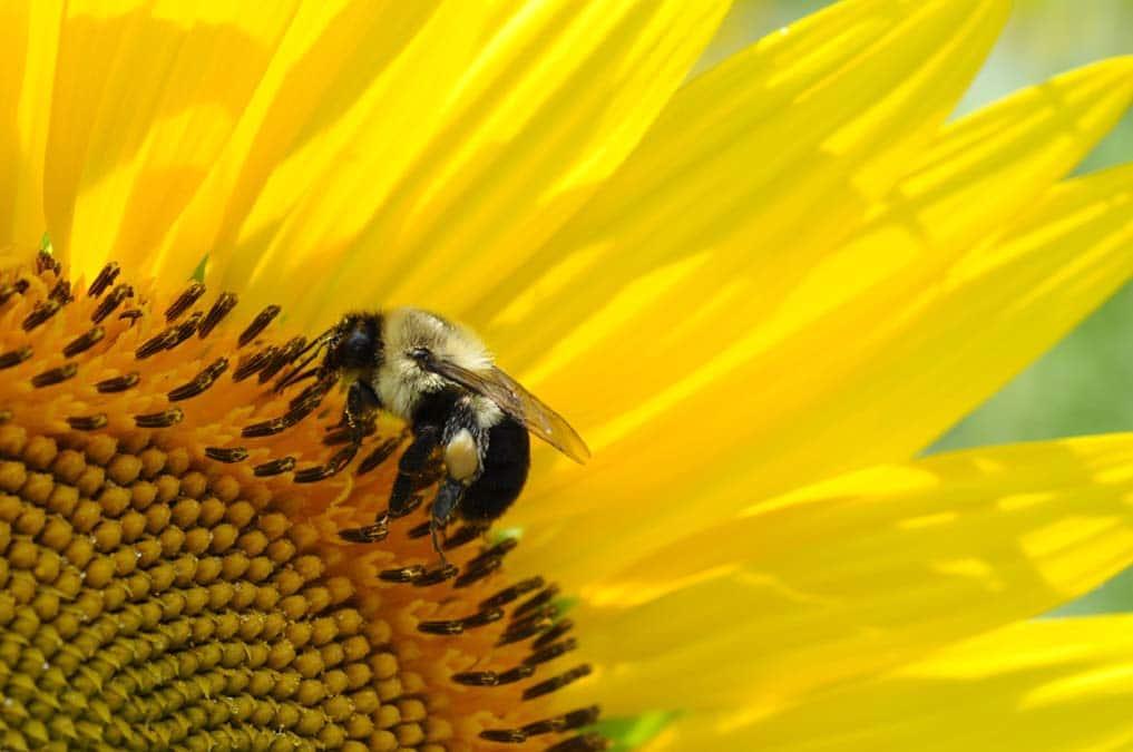 Miel et Délices, Location de ruches pour la pollinisation.