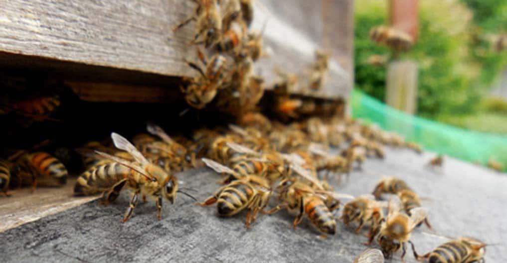 Miel et Délice - Vente de miel  34 360 hérault occitanie